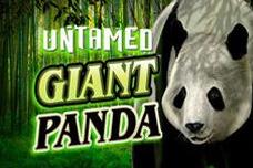 Untamed_giant_panda