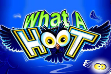 What_a_hoot