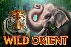 Wild_orient
