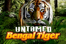 Untamed_bengal_tiger